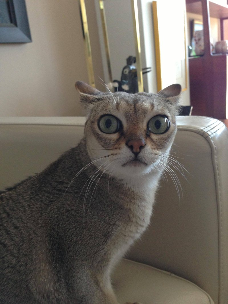 cat with big eyes, funny cat pictures, funny cats