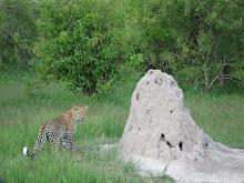 Kickass Termite Mound