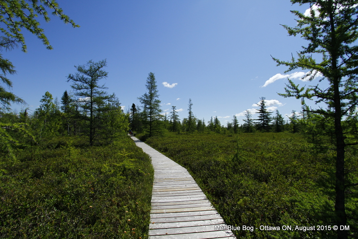 how to go to gatineau park from ottawa