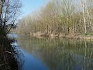 Panoràmica del bosc de ribera que envolta el Llobregat