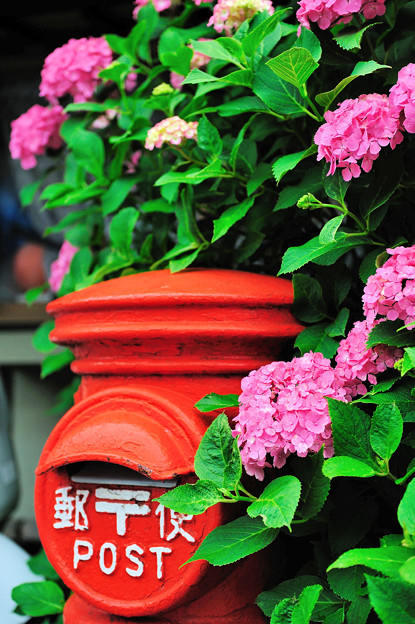 鎌倉のあじさいと郵便ポスト