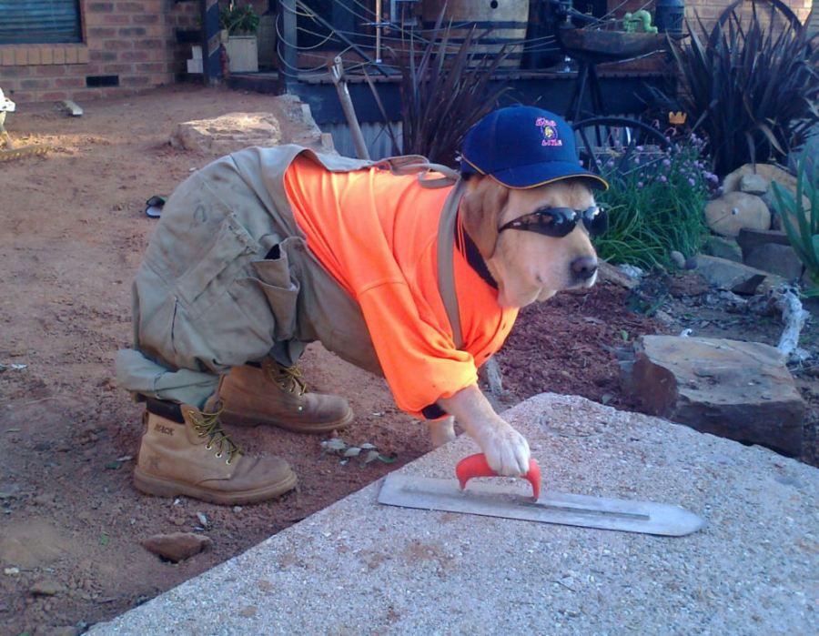 cachorro vestido de pedreiro fazendo um servico com cimento e oculos escuros