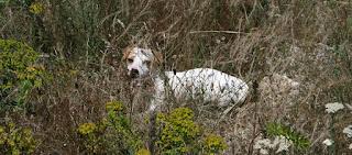 Camouflaged puppy