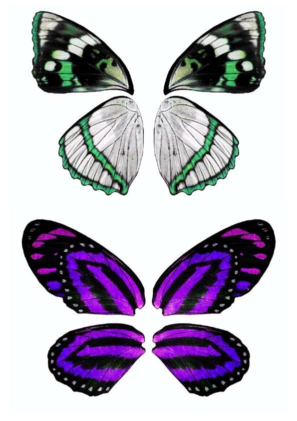 Dibujos y plantillas para imprimir alas mariposas para hadas - Plantillas de mariposas ...