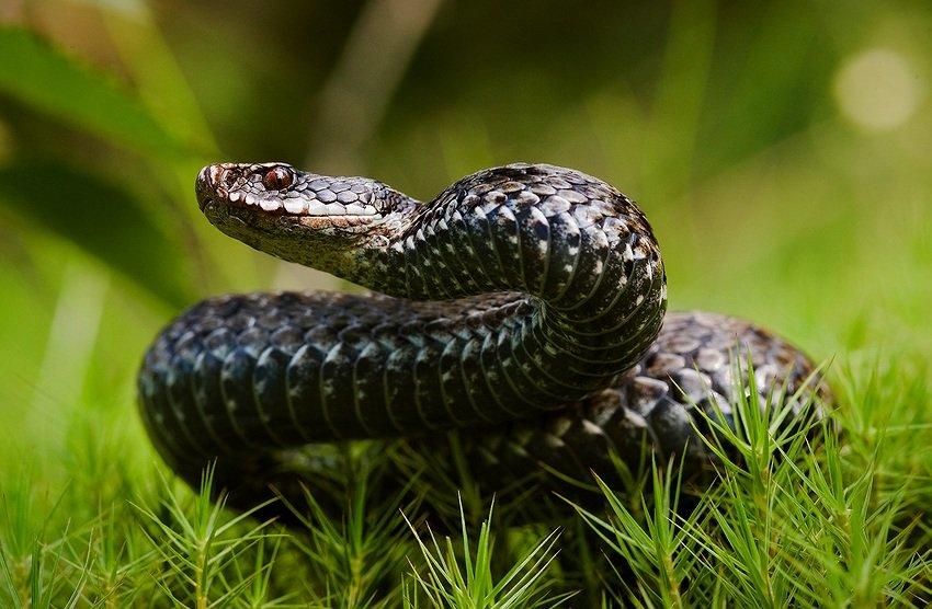Что делать, если вас укусила змея!
