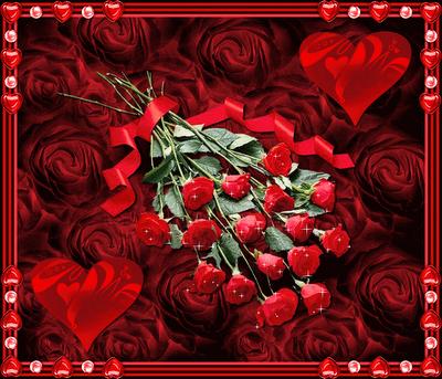 Imagenes De Rosas Rojas Preciosas - 7 imagenes de regalos de rosas rojas y frases tiernas para