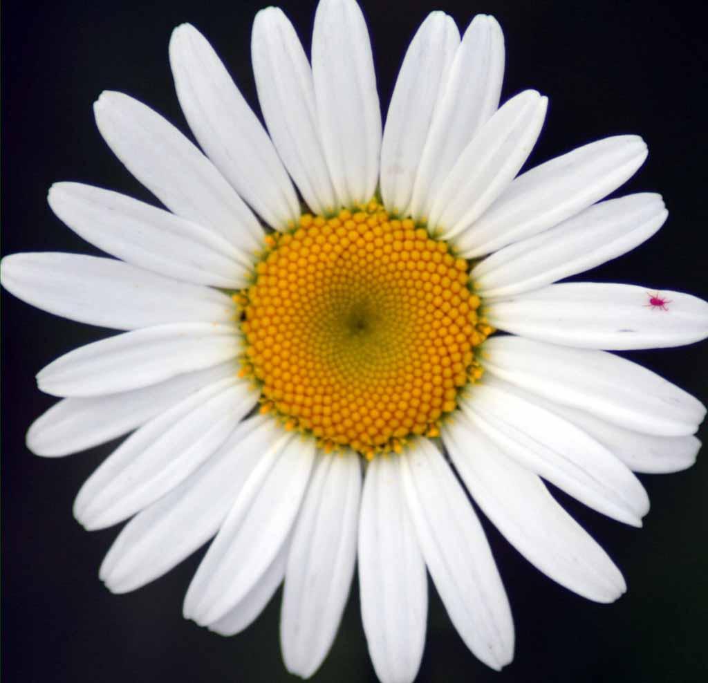 Beautiful Flower Nature Scenery Wallpapers