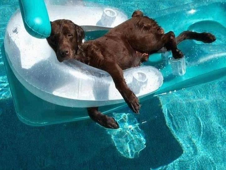 Cute dogs - part 95, funny dog pictures, dog photos, adorable dog, dog gallery