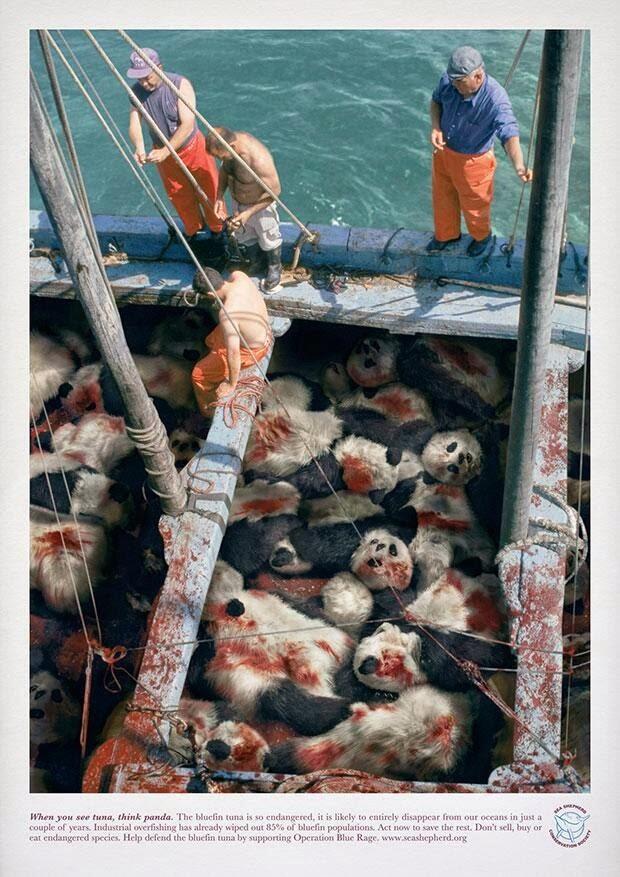 Publicidad que incomoda, osos panda
