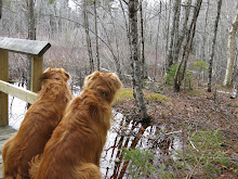 Woodland Rusty Pups