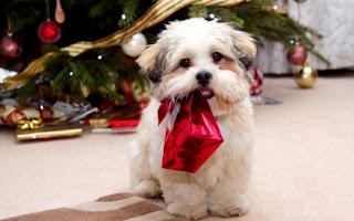 Christmas Dog Images