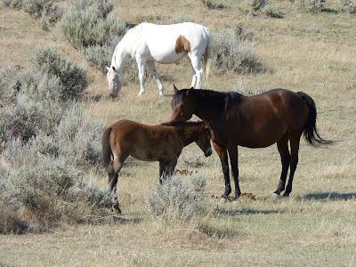 horses on the battlefield