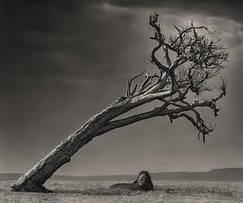 Biodiversidad  a través de la fotografía [megapost animal]
