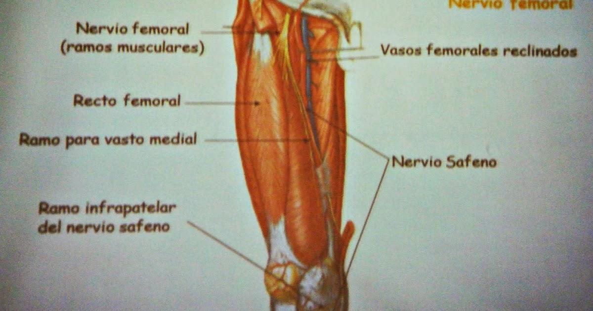 Esencial Masajes: Nervio femoral