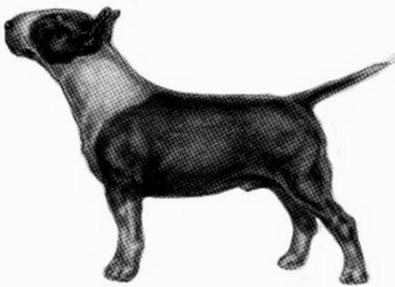Subtipo Bull