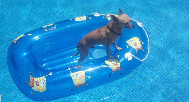 Pelo pico pata peligro en las piscinas for Piscinas con patas