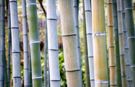 Bamboo Fabric3