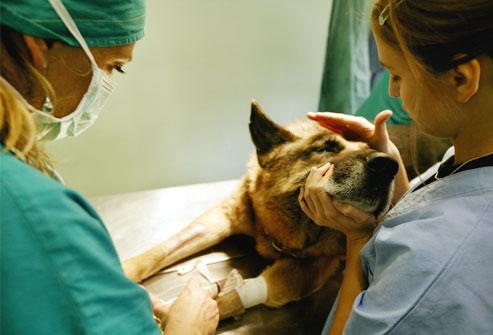 PSICOLMASCOT: Las 10 señales de advertencia de cáncer en perros y gatos