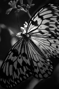 أثر الفراشة