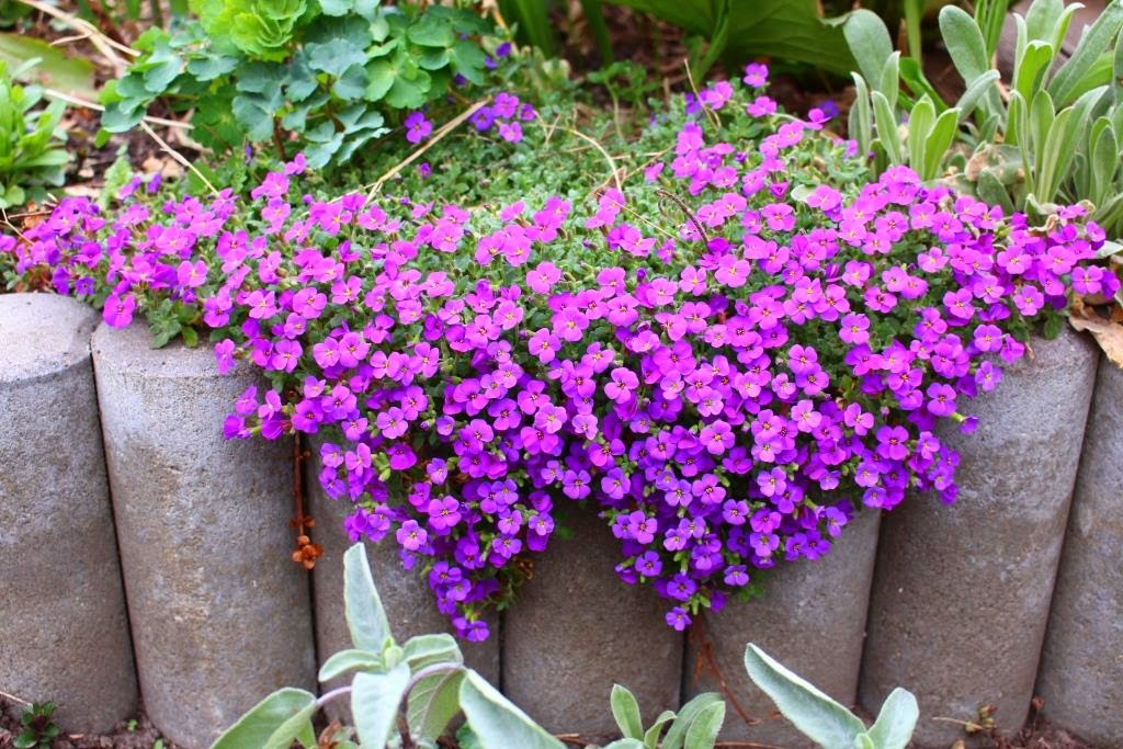 Fotosafari - Im Garten ist kein Halten mehr