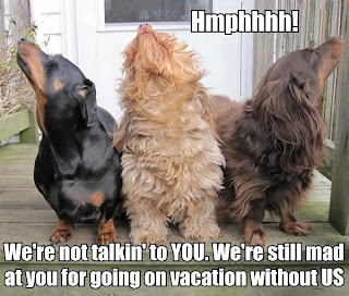 Hmpf. We are not talkin' to YOU. We're still mad at you for going on vacation without US.