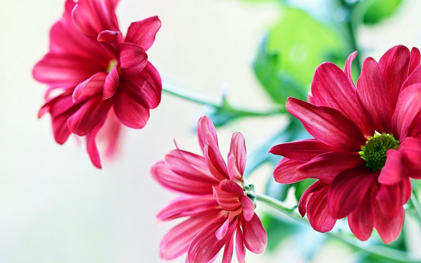 Beautiful Flower Wallpapers For Facebook|http ...
