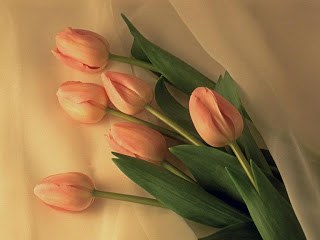 Tulipanes rosa entre seda