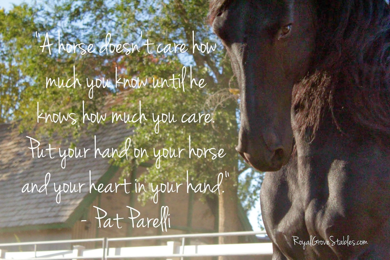 Buy Jumping Horse quotes pictures pictures trends