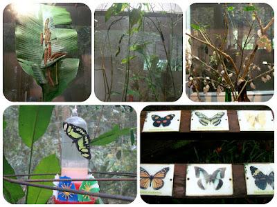 Ciclo de vida da borboleta mostrado no Parque das Aves, em Foz do Iguaçu