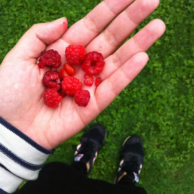 Kitty N. Wong / berries + grass