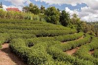 Teegarten bei Tempel