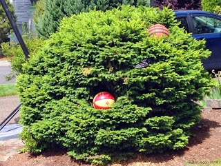 Neighborhood Basketball Bush