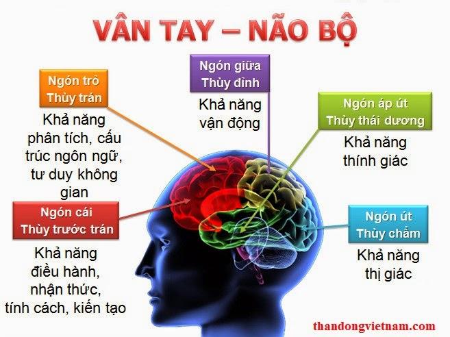 Mối liên hệ giữa vân tay và não bộ
