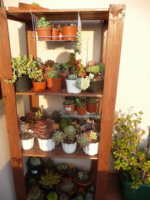 Mi entorno y mi rinc n estanteria para tus plantas - Estanteria para plantas ...