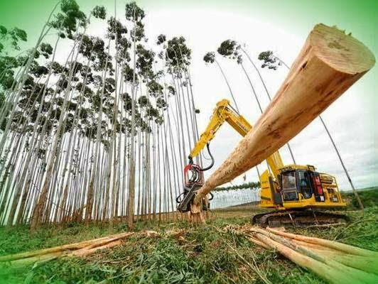 Terras para Reflorestamento