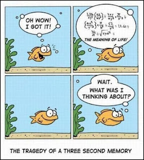 The meaning of life The Tragedy Of A Three Second Memory, The meaning of life, The Tragedy Of A Three Second Memory, goldfish memory, goldfish comic, goldfish, goldfish meaning of life, goldfish mathematics
