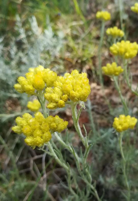 Les plantes de nos collines