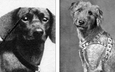 perros nazis que podían hablar