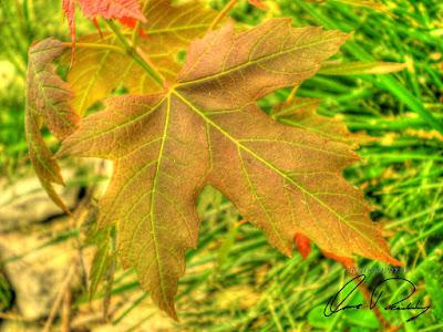 fall orange leaf leaves
