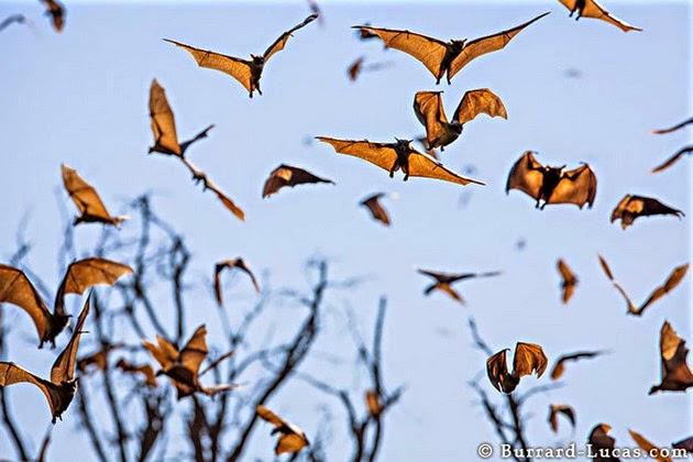 animal migration photos-12
