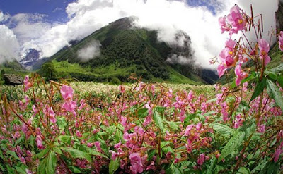 Himalaya Valley of Flowers, himalaya