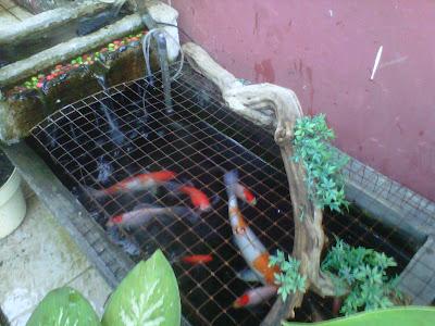 the buldani: membuat kolam ikan