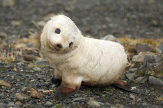 Funny Lovely Baby Seals New Photos