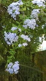 Primavera em Cachoeira