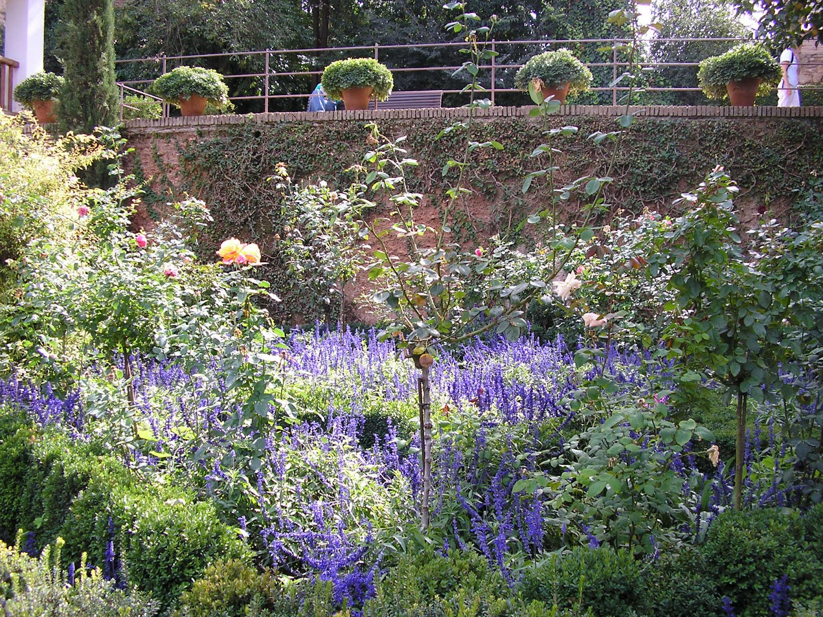 Marta tra i fiori verde que te quiero verde - I giardini del te ...