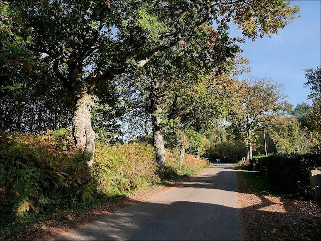 promeneurs au vieux bourg saint just ille et Vilaine allée de chênes
