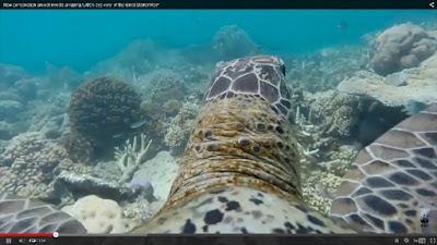 http://m.ara.cat/societat/Gran-Barrera-Corall-Australia-vista-tortuga_0_1387061407.html