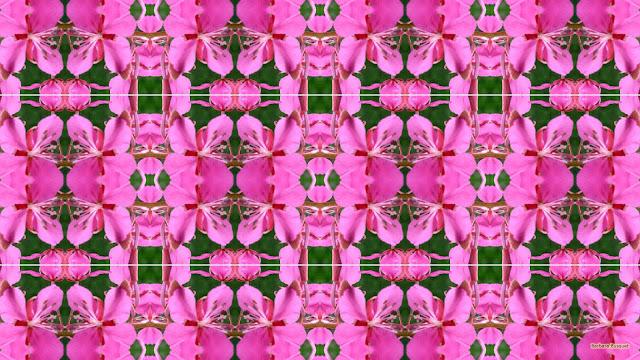 Patroon wallpaper met roze bloemen