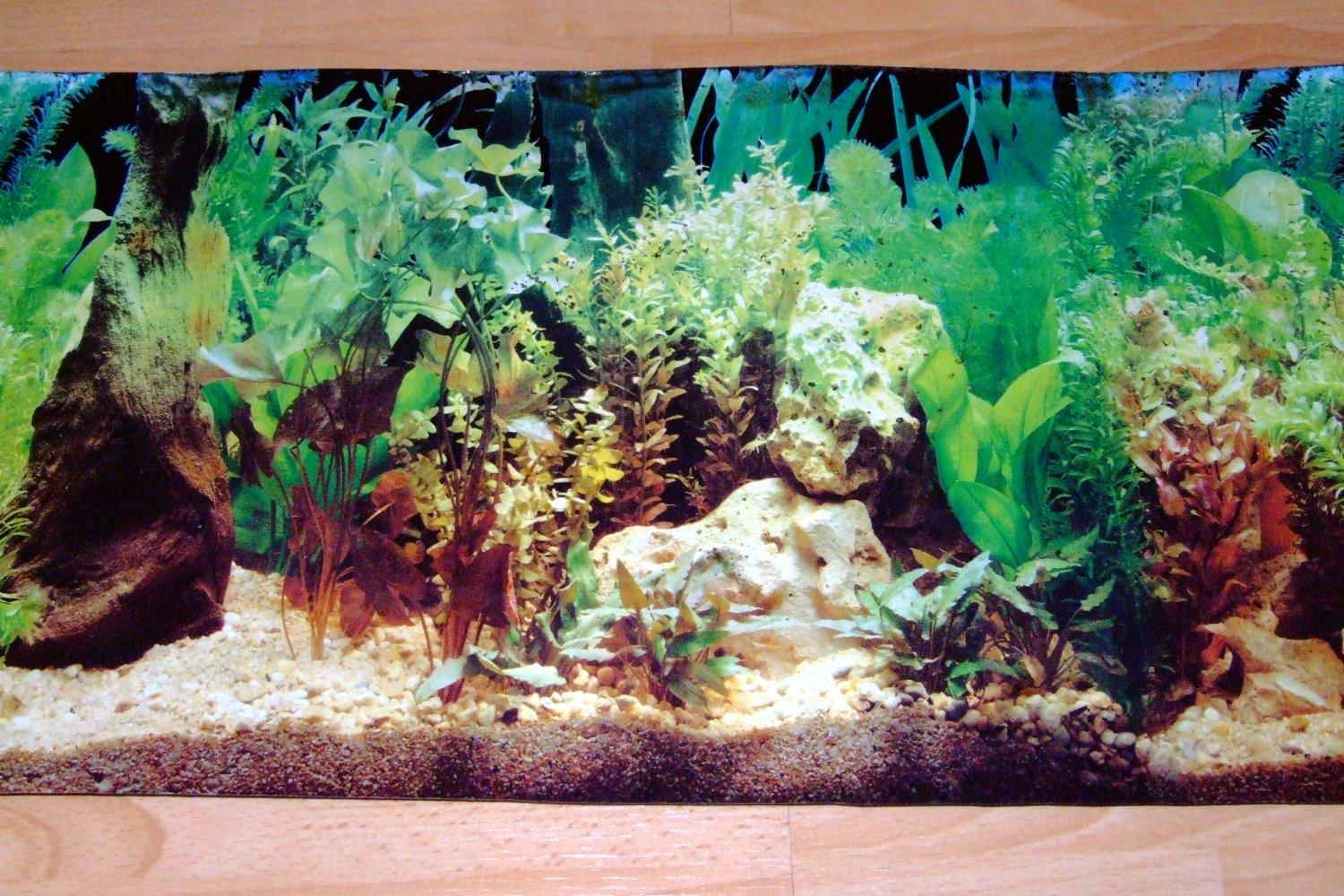 Aquarium Background Scenes Background Desktops Pics