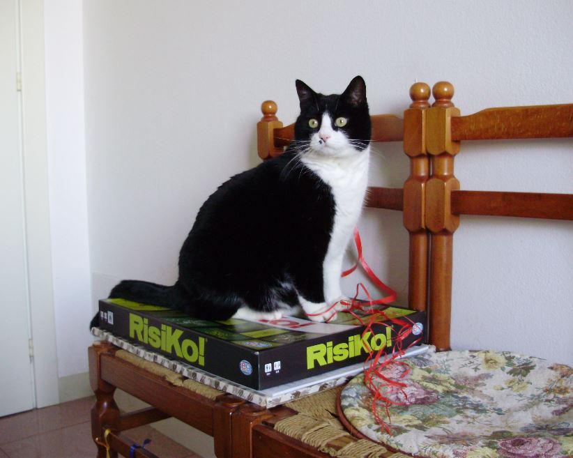 Rumore di fusa giochi per il gatto in casa attivit e - Gatto defeca per casa ...